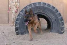 Znalezione obrazy dla zapytania tunel szkoleniowy dla psa