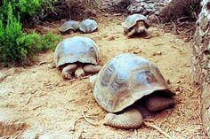Declaran emergencia ambiental en las islas Galápagos