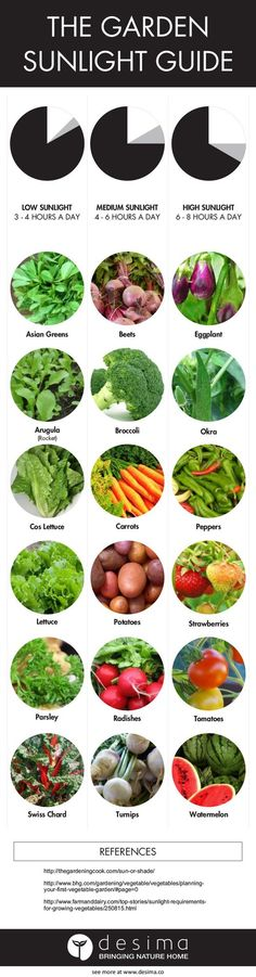 """Infographic on veggies you can grow again  Have you tried doing any of these, what was the result?    Share this infographic on your site.  <p><a  href='http://www.desima.co/blog/2015/7/24/10-veggies-you-can-grow-again'><img  src='http://static1.squarespace.com/static/5582f798e4b0e8fc7ea52d4c/t/55b1d769e4b019bb4cd80c40/1437718382809/10_veggies_you_can_grow_again?format=1000w'  alt='10 Veggies you can grow again' width='540' border='0'  /></a></p><p>Infographic by <a  href=""""http://www.des..."""