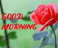 Nice Good Morning Images, Good Morning Picture, Good Morning Flowers, Good Night Image, Morning Pictures, Good Morning Wishes, Good Morning Quotes, Morning Pics, Happy Akshaya Tritiya Images