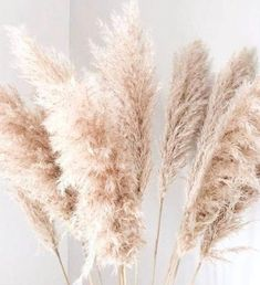 5 Extra Large Dried Pampas Grass 4ft Dried Flowers For | Etsy Lavender Flowers, Diy Flowers, Flower Vases, Fake Flowers Decor, Wedding Flowers, Dried Rose Petals, Dried Flower Bouquet, November Flower, Aus Day