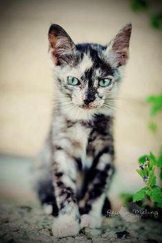 (What a pretty kitty - love the coloration)
