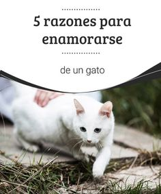 5 razones para enamorarse de un gato  En este caso, los perros la tienen más fácil, aún así te damos algunas razones para enamorarse de un gato. #gato #amor #razones #consejos