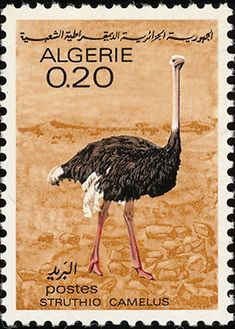 ostrich on stamps - Google Search