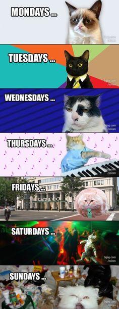 @Alli Mattice @Michele Giese @lauren ramirez @Tonie Wagenfuhr @Courtney Dallimore @Kayla Whistler  Cat's Weekly Timeline
