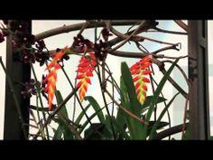 Florian Seyd en Ueli Signer tijdens Our World of Plants!