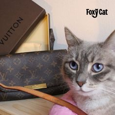 Luxury Cat