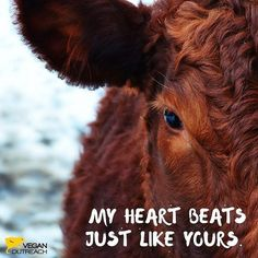 My heart beats ♡ just like yours♡ . GO VEGAN !!!! 🐖🐄🦊🐺🐃🐂🐇🐰🦏🐾🦃🐧🐓🐻🐁🐣🦅🐼🐨🐯🐶🦍🐒🐴 . Rp @veganoutreach . #Vegancommunity #rpvegancommunity #govegan #peta #pet #yoga #like #Veganfoodlovers #veganfood #veganrecipe #veganrecipes #fatloss #fatfree #fat #Vegetarian #VeganFitness #Veganismu #veganhawaii #veganjapan #veganmanila #veganhongkong #veganasia #veganoceania #veganrecipe #veganfoodshare #veganfoodlovers #plantbased #vegan #vegansofIG #whatveganseat