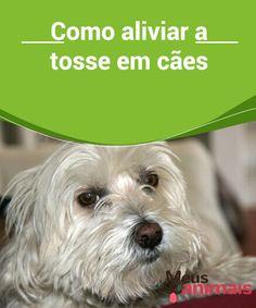Tosse em cães, saiba como melhor aliviá-la e ajudar seu cão  Temos que encontrar a causa que #ocasionou a tosse, mas em geral não ela é #perigosa e há coisas que podemos fazer em casa para aliviar a #tosse em cães. #Saúde