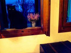 Mon chat noir