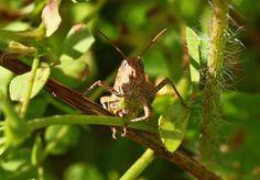 Aaah, grasshopper . . . by Darren Boxer
