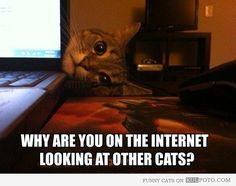 "Overly attached kitten - Funny kitten lying behind a laptop with only the head sticking out: ""Why are you on the internet looking at other cats?"""