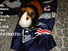 Big football day today!  Who are your pets rooting for?