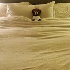 angelic Mousey (Derek & Fredrik's sweet dog)