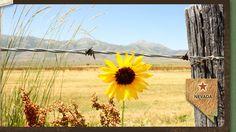 Winnemucca, NV Land For Sale - LandForSaleStore