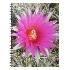 """F12 Ball Cactus Flower """"Escobaria vivipara"""" Notebook Custom Office Party #office #partyplanning"""