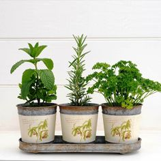 Send the master chef a living kitchen garden of classic herbs! This beautiful gift set will make a smart addition to any kitchen bench, where the herbs can be pinched and plucked to complement the che. Herb Pots, Handmade Lamps, Perfect Plants, Plants Online, Gardening Gloves, Flower Delivery, Plant Holders, Potted Plants, Flower Pots