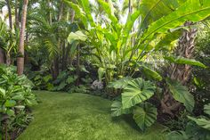 Get advice for enjoying a good looking Florida Gardening, field, or front yard. Our experts inform you all the essentials to effectively South Florida Gardening Tropical Backyard Landscaping, Tropical Garden Design, Florida Landscaping, Outdoor Landscaping, Outdoor Gardens, Landscaping Ideas, Florida Gardening, Tropical Gardens, Landscaping Software