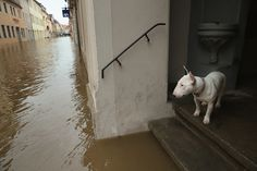 A dog looks out from a doorstep at a flooded street on June 2013 in Pirna, Germany. Should I Stay, Danube River, Central Europe, Photojournalism, Germany, In This Moment, Dogs, Big Picture, Pictures