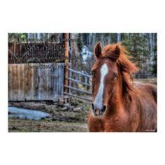Friendly Dun Ranch Horse Photo & Poem Poster Print just for horse-lovers!