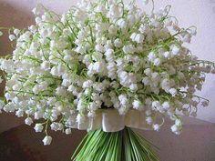 de muguet porte-bonheur bouquet of lily of the valley My Flower, White Flowers, Beautiful Flowers, Lily Of The Valley Bouquet, Arreglos Ikebana, Wedding Bouquets, Wedding Flowers, White Gardens, Floral Arrangements