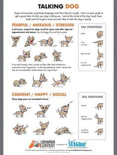 lots of body language charts