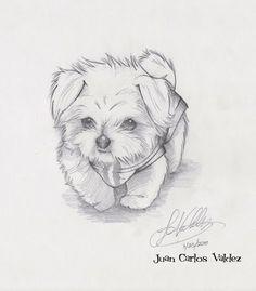 Afbeeldingsresultaat voor maltese puppy drawing