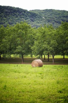 Country Living ~ hay in the field Country Charm, Country Life, Country Living, Country Roads, Country Bumpkin, Monuments, Fresh Farmhouse, Down On The Farm, Farms Living