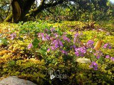 Baños de bosque o Shinrin-yoku. Es la técnica nacida en Japón que promete hacernos más saludables, creativos y felices. Nansa Natural y VidaInstintiva ofrecemos un fin de semana de naturaleza y relajación en el alto #ValledelNansa #Cantabria #Relax #bosques