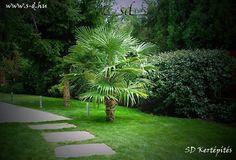 kerti tipegő Budapest, Stepping Stones, Pergola, Outdoor Decor, Plants, Stair Risers, Outdoor Pergola, Plant, Planets
