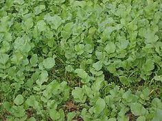 Bodemvruchtbaarheid is het vermogen van de bodem om een plant van voedingsstoffen te voorzien. De bodemvruchtbaarheid wordt bepaald door de chemische, fysische en biologische eigenschappen.