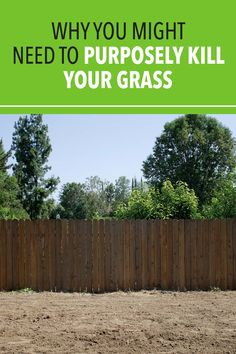 If your lawn is 50 percent or more bare ground and weeds, it's best to kill off the entire lawn and replace it with new grass. #lawn #grass #home #lawncare