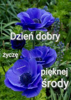Japanese Anemone, Longwood Gardens, Peonies Garden, Exotic Flowers, Constellations, Shade Garden, Bonsai, Perennials, Seeds