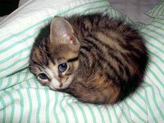 Dude, like 5 more minutes, PLEASE, MEOW #cat napper #kitten