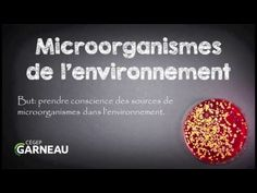 Microorganismes de l'environnement