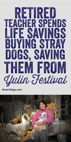 Retired Teacher Spends Life Savings Buying Stray Dogs, Saving Them From Yulin Festival!