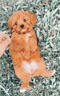 Super Cute Puppies, Cute Baby Dogs, Cute Little Puppies, Cute Dogs And Puppies, Doggies, Tiny Puppies, Cute Wild Animals, Super Cute Animals, Cute Little Animals