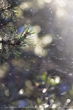 Cazadora de inspiración © Anna Tykhonova - Andorra