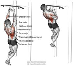 Close neutral grip pull up. A compound pull exercise. Muscles worked: Latissimus Dorsi, Brachialis, Brachioradialis, Teres Major, Posterior Deltoid, Rhomboids, Levator Scapulae, Middle and Lower Trapezii, Sternal Pectoralis Major, and Pectoralis Minor.