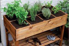 Como fazer uma horta orgânica em casa