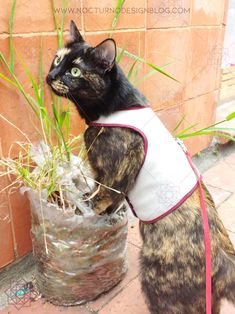 Costura fácil: Arnés para gatos + molde gratis – Nocturno Design Blog Design Blog, Arts And Crafts, Car, Dogs, Vases, Molde, Ideas, Cat Collars, How To Make Necklaces