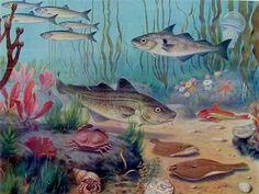 Schoolplaat 'In de Noordzee' van M.A. Koekoek