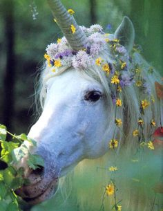 Flower strewn unicorn...What Fairy wouldnt love to ride on this magical creature.