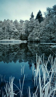 Winter hidden away in the scenic beauty of nature.
