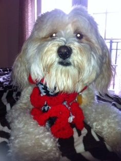 Doggiescarves@gmail.com Made by hand in the U S A portion of sales goes to no kill animal shelter