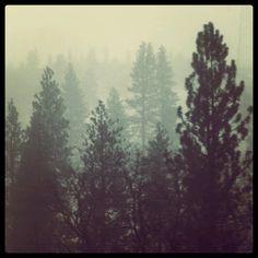 Washington foggy mountains such beauty Foggy Mountains, Mists, Washington, Outdoor, Beauty, Outdoors, Outdoor Games, Washington State, The Great Outdoors