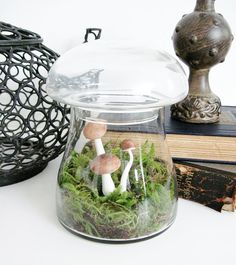 my goal 1) start a collection of mushroom-shaped apothecary jars  2) learn to create terrariums