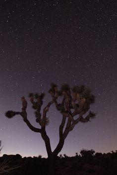 llbwwb:    Starry Night in Joshua Tree NP (by Rich Bitonti)