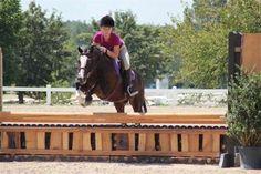 Petey-Very cute, medium, big bodied, Welsh X geld. Tons of mileage! Cross Country Jumps, Ponies For Sale, Welsh, Jumper, Pony, Horses, Dark, Big, Building