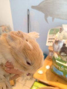❤️❤️❤️ Rabbit, Bunny, Animals, Rabbits, Cute Bunny, Animales, Animaux, Bunnies, Animal